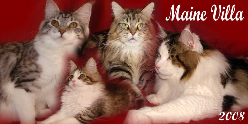 Bengal cat dayton ohio